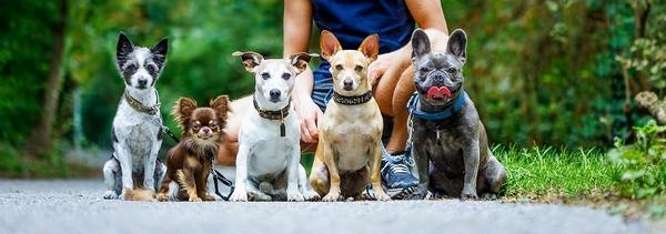かわいい子犬と暮らすために! 正しいブリーダーの選び方とは?